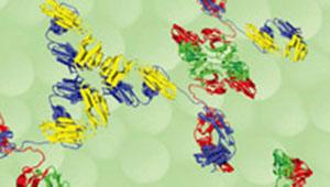 Antibodix